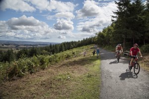 Haldon Forest bike trail