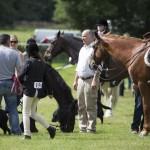 Ashcombe Horse & Dog Show