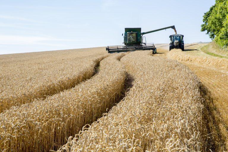 Combine Harvester in Ashcombe Devon