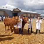 Cattle at Devon County Show 2018