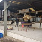 Sheep Shearing at Devon County Show 2018